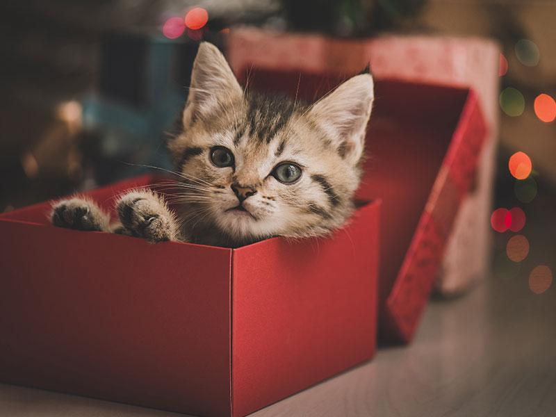 10 idées cadeaux pour les fans de chat